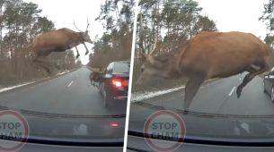 Evo zašto valja poštivati prometne znakove upozorenja na divljač