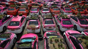 Na Tajlandu nekorištene taksije pretvorili u – povrtnjak